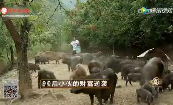 90后小伙山上养猪,看他如何实现财富逆袭!