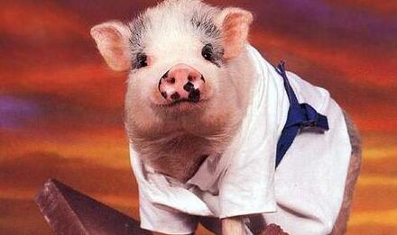 无语!猪场正常生产却被举报生产地沟油……