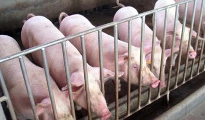 养猪人:进猪50头 给大家扯扯哪些养殖成本,进来听听