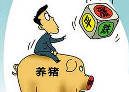 生猪出场价跌破八元关口 五一期间猪价预测