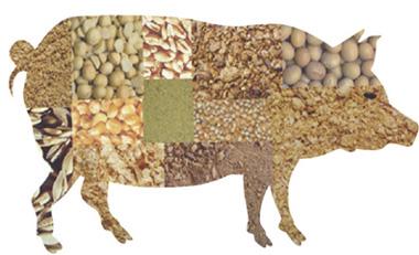 猪价基本稳定 豆粕价格小幅回落