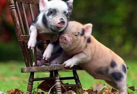 南方生猪出栏价格以跌为主 北方多地反弹