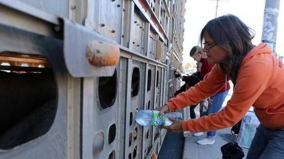 加拿大动物保护家给待宰猪喂水遭指控限被判刑