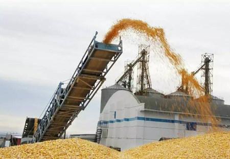 供给侧改革见成效 储备玉米拍出高溢价