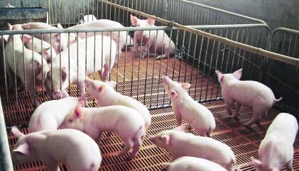 一周综述:蔬果大量上市 猪肉阶段性消费淡季渐开启