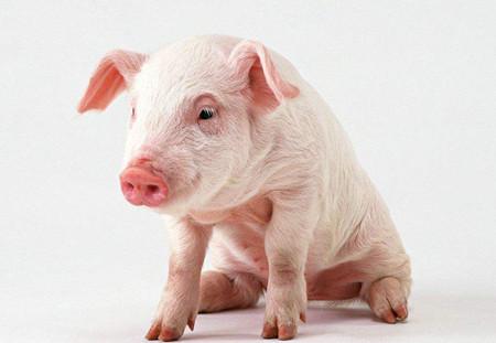 小猪为什么长得慢?是因为养殖户普遍有以下误区!