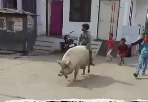 骑着一头猪那是何等的威风,后面还跟着一群孩子,冲啊!