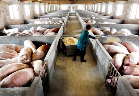固液分离技术在畜禽养殖粪水处理与资源化利用中的应用
