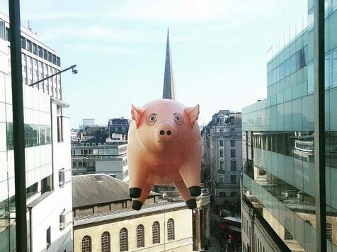 风口的一头猪撞上了BBC总部!原来是为了纪念一首歌