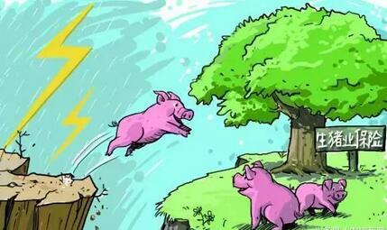 猪市涨了又跌,端午节到底能不能带动猪价上涨?