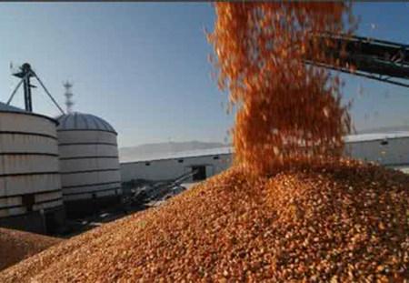"""东北深加工企业续享玉米拍卖""""新福利"""""""
