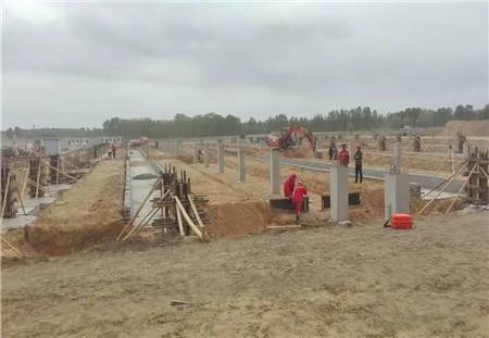 2500头加系原种猪将于10月落户黑龙江