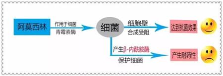 杆迪——酸化阿莫西林倡导者