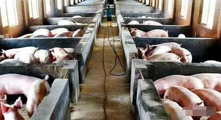 站在风口:猪都要装地暖——记空气能采暖设备在猪场的应用
