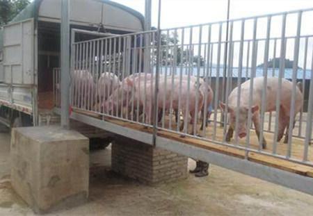 夏季高温天气生猪运输要注意这些事情