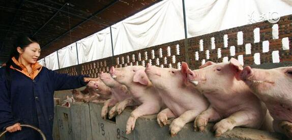 做到猪场零排放并不难 关键是选对工艺