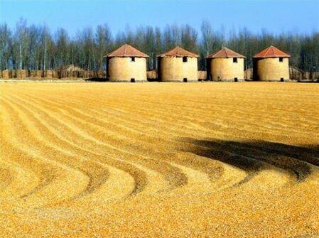 猪价连续大涨 玉米、豆粕下跌养殖利润加速回升