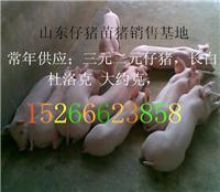 哪里的小猪货源多价格低15266623858