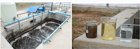 生猪屠宰场废水总氮有何环保要求