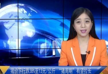 """猪价下行跌38%至每公斤13元 """"猪周期""""有望拉长"""