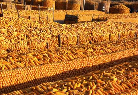 去库存步伐稳健 玉米市场较平静