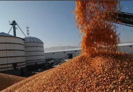 玉米价格又涨了!14年玉米也要拍了?