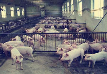 猪场的五个二八原则