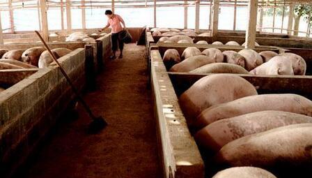 """猪价行情分析:""""假如生活欺骗了你"""",猪价却不会!"""
