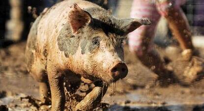 东北再次领涨!全国猪价将止跌逆袭?!