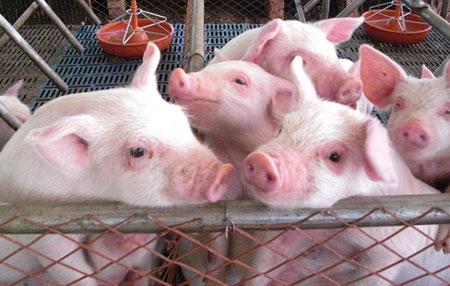"""""""没想到,一头猪竟能分割出260钟产品""""美国大学生惊呆了!"""