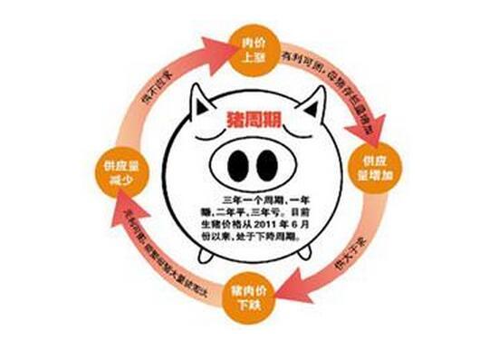 猪周期大起大落 养殖户苦不堪言 扬言要放弃养猪