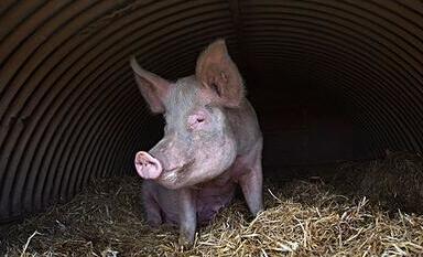 农业保险保费10年增长7倍 告别靠天吃饭和猪贱伤农