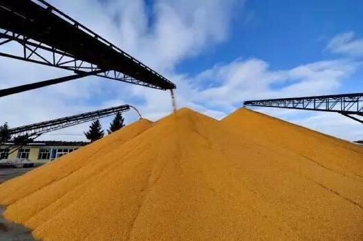 """玉米收储制度改革取得""""首战成功"""""""
