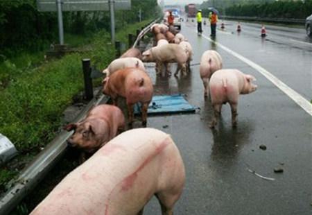 当心,不要跌进七八月份的猪价陷阱