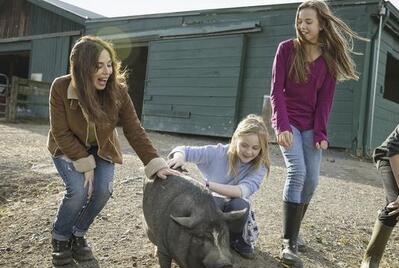 惊!国外猪场利润比我们多数十倍,它们这样养猪!