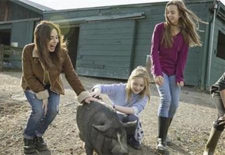 国外猪场利润比我们多数十倍,她们有哪些饲养小技巧