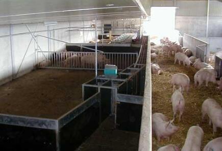 """""""问题肉""""影响持续 巴西肉类进口商提高检验标准"""