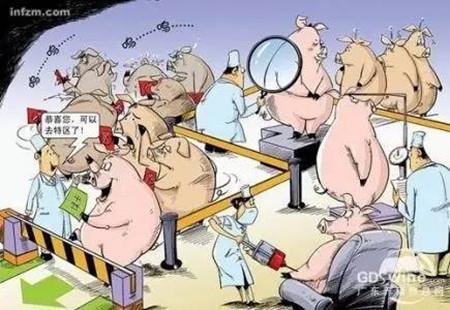 喹乙醇等3种兽药或被禁止用于猪鸡饲料添加剂!