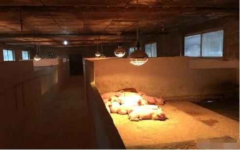 猪场取暖设施哪种方式最好?