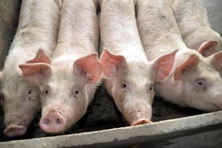 猪价暴涨势在必行,可以从以下这几点来进行判断