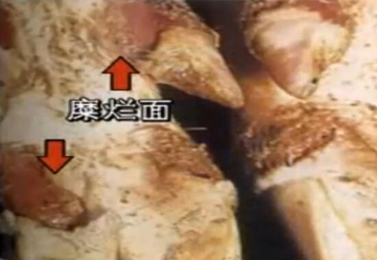 猪病技术:猪口蹄疫病原及流行特点,真详细!