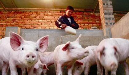 一周综述:上半月猪价或再度经历一次低幅度调整