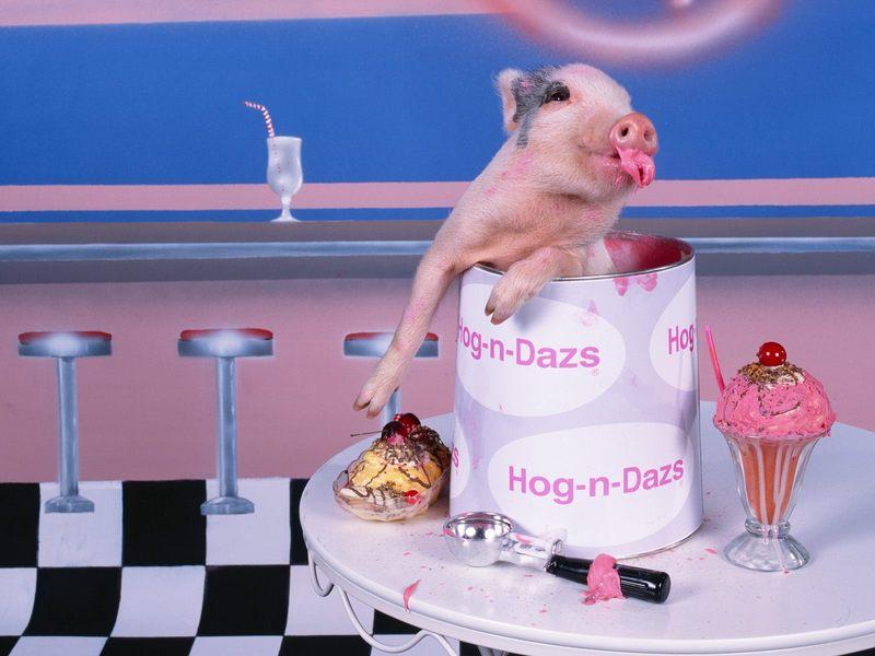 猪,相信大家都不陌生吧,每个脑海中都有一个对猪的映像,这类猪你肯定没见过,它们有的戴的帽子,有的在弹小提琴,有的在打架,真的是可爱极了。