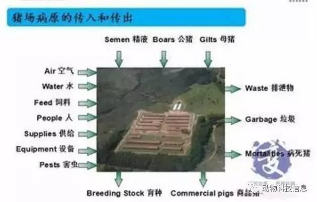 规模猪场生物安全体系关键环节,做好了就能控制疫病!