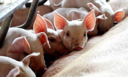利好将至:供需博弈不动声色,7月猪价将涨至7.2元/斤