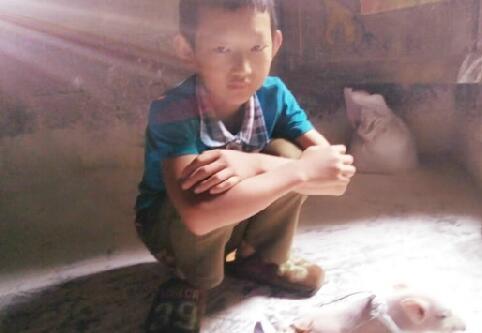 """小猪仔先天残疾 11岁小男孩开启小猪轮椅""""人生"""