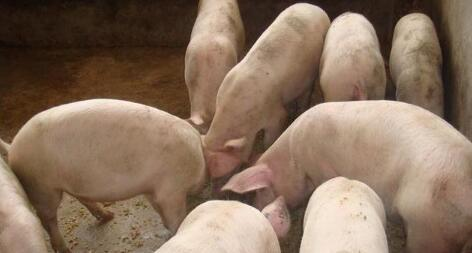 """猪肉价格出现""""惊愕""""之战,肉价居然1块钱?"""