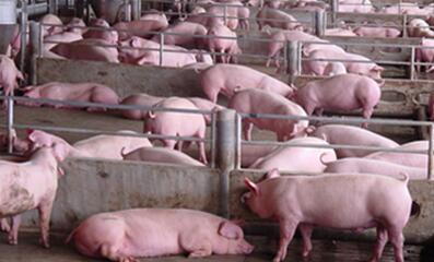 发改委:市场供给将稳步增长 猪价仍将维持偏弱走势