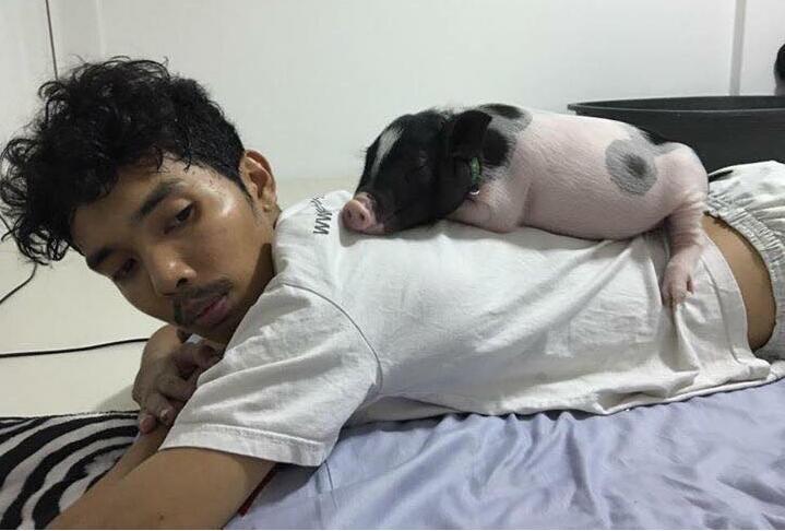 镜头下:一头猪与一名小伙的恩爱日常