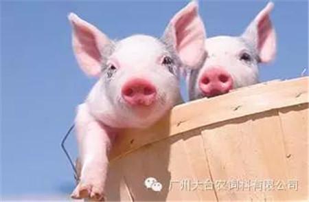仔猪都有哪些常见病?